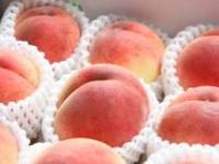 白桃(桃)のイメージ画像
