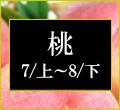桃の商品一覧