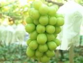 千果園のシャインマスカット