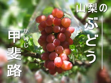 甲斐路(ぶどうの品種)