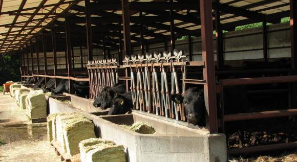 子牛の牛舎