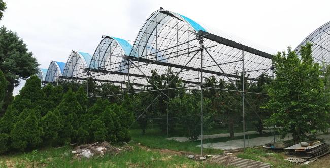 西野観光農園サイドレス(さくらんぼ畑