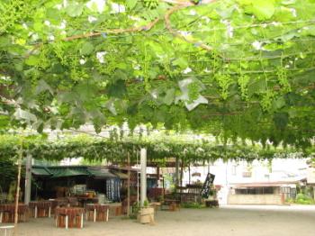 勝沼ブドウ園、専果園外観2