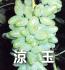 涼玉(ぶどうの品種)