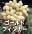 ゴールドふいんがー(ぶどうの品種)
