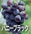 ハニーブラック(ぶどうの品種)