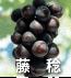 藤稔(ぶどうの品種)