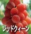 レッドクイーン(ぶどうの品種)