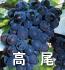 高尾(ぶどうの品種)