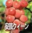 安芸クイーン(ぶどうの品種)