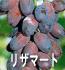 リザマート(ぶどうの品種)