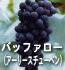 バッファロー(ぶどうの品種)