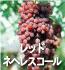 レッドネヘレスコール(ぶどうの品種)