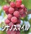 シナノスマイル(ぶどうの品種)