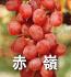 赤嶺(ぶどうの品種)