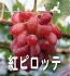 紅ピッテロ(ぶどうの品種)