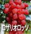 ロザリオロッソ(ぶどうの品種)