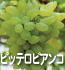 ピッテロビアンコ(ぶどうの品種)