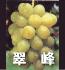 翠峰(ぶどうの品種)